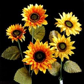 sun_flowers.jpg